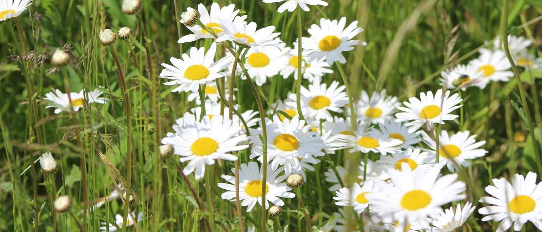 Gartenarbeit in 89415 Lauingen und Umgebung
